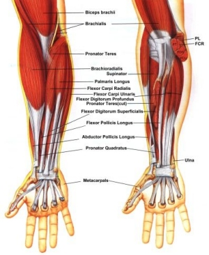 Strengthening of the wrist is it possible talk tennis